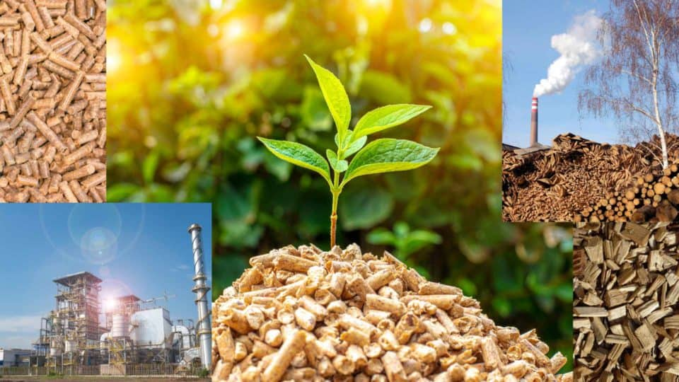 What Is Biomass Power?